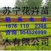 浙江批发绿化小苗红叶石楠18761102388