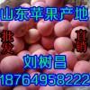 供应山东苹果哪里最便宜/山东苹果产地价格/大量批发红富士苹果