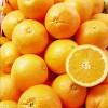 大量供应秭归脐橙