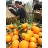 本公司大量供应柑 橙 柚子从采摘洗果打腊包装全程一条龙服务