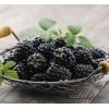 有机树莓鲜果批发零售