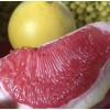 三红红心柚子苗嫁接果树苗盆栽地栽室内南方种植当年结果四季包邮
