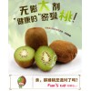 陕西眉县徐香猕猴桃应季水果新鲜当季约10斤绿心奇异果