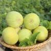 山东莱西马连庄甜瓜新鲜水果非羊角蜜甜瓜果园现摘5斤顺丰包邮