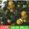 新鲜5斤10斤净重当季应季水果特产柚子西柚应季批发代发